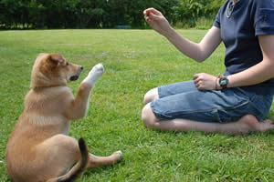 How To Clicker Train Your Dog To Sit