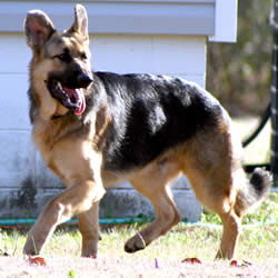 Gsd Dog Names Female
