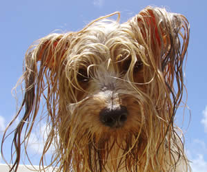 Image result for cool scruffy dog funny cartoon