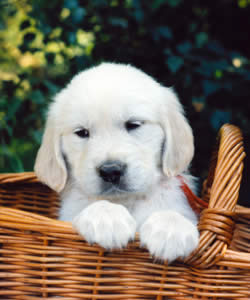 Dog Names And Puppy Names For Every Dog Breed And Personality