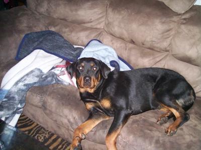 Pixie - My Rottweiler