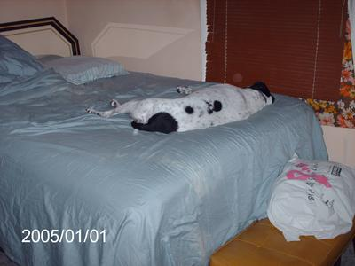Her 'private' bed.